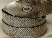 Ремень кобра с головой